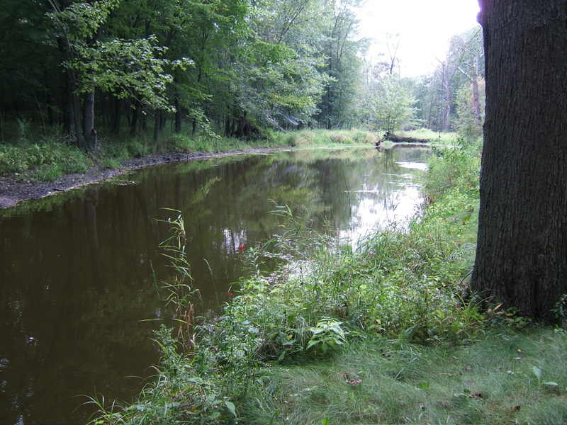 The woodlands pond in the dead of summer