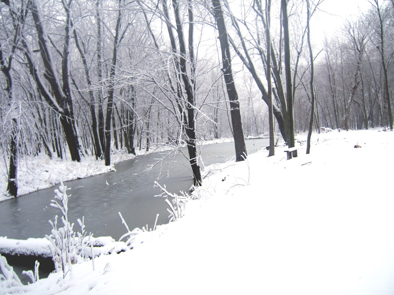Woodlands pond in the dead of winter